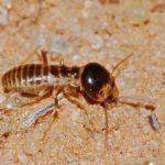 6 Most Common Questions & Answers about Termites