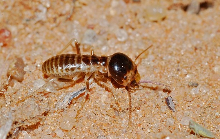 Common Questions about Termites