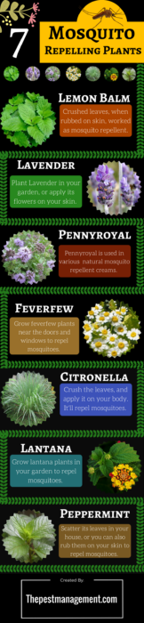 7 Mosquito Repelling Plants to Keep Pests Away