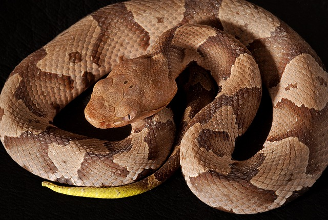 Repel Copperhead Snakes