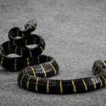 Does Snake Repellent Work? Are They Worth a Try or Not?