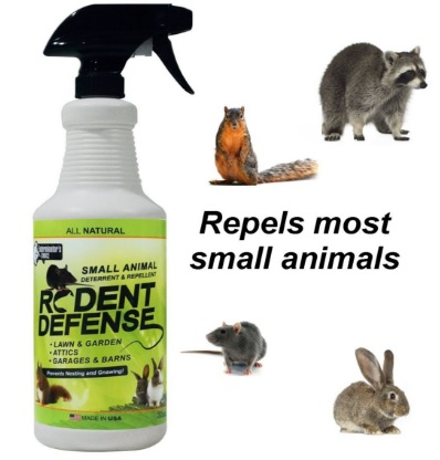 Top Electronic Raccoon Repellents