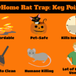 Best Rat Trap Reviews: Most Effective Outdoor & Indoor Rat Traps