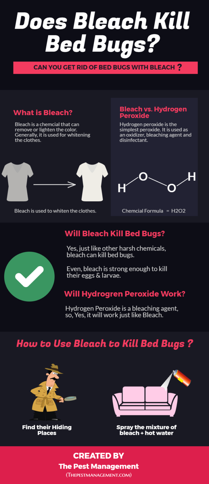 Does bleach kill bed bug eggs