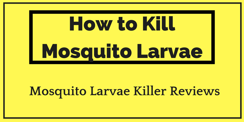 How to Kill Mosquito Larvae