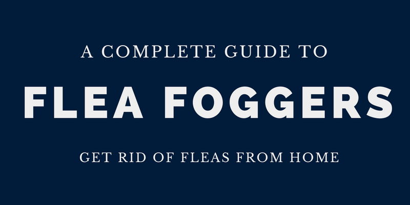5 Best Flea Foggers in 2017 for Quick Results  Trusted   Reliable. What are the Tiny Red Bugs on Concrete  Ways to Get Rid of them