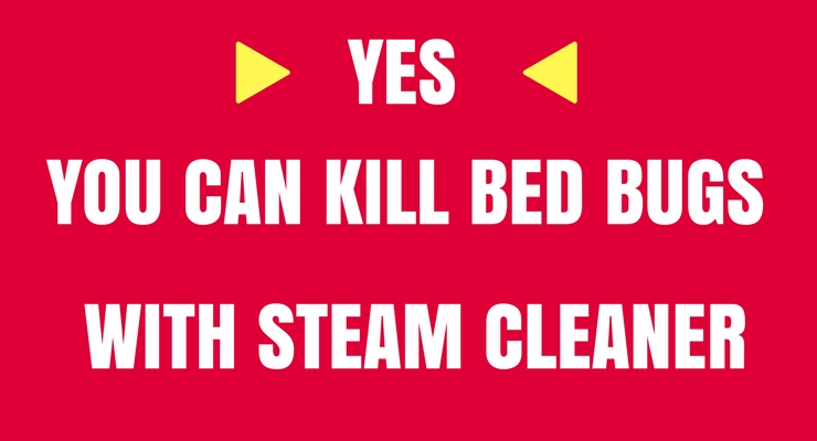 can you kill bed bugs with steam