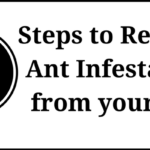 Ant Infestation in Car: How to Get Rid of Ants from your Car