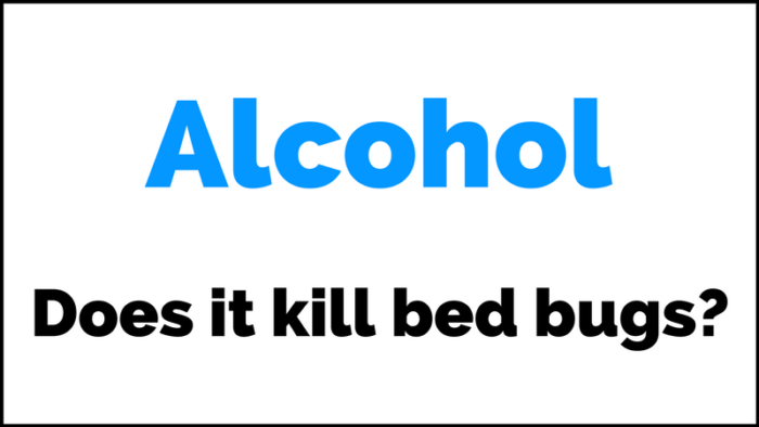 Does Alcohol Kill Bed Bugs 28 Images Does Alcohol Kill