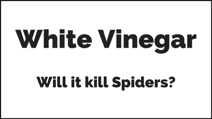 Vinegar Kill Spiders