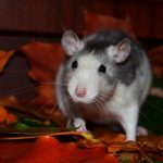 Killing Rats with Antifreeze: Will It Kill Squirrels, Chipmunks, & Others?