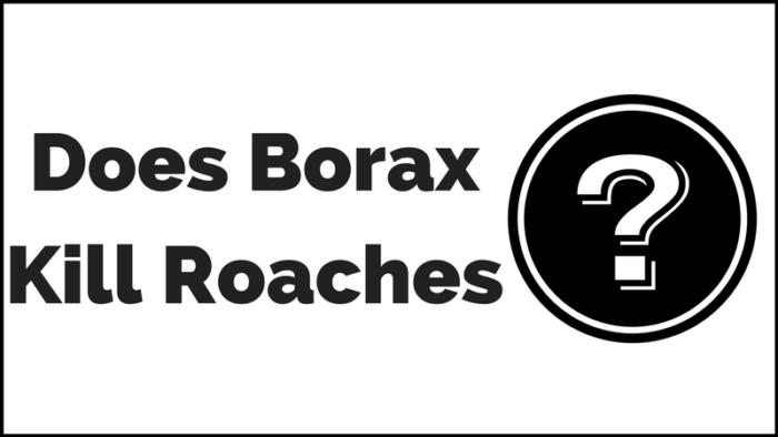 Borax for Roaches: A Step by Step Guide to Get Quick Results