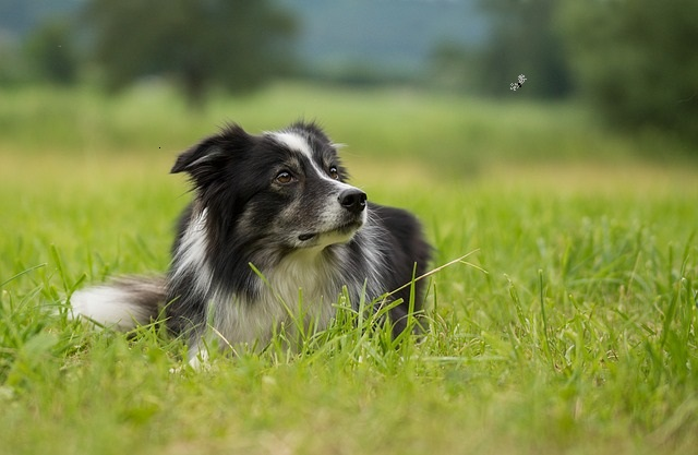 getting rid of gnats on pets
