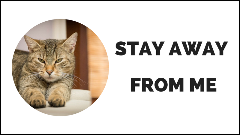 Is K9 Advantix toxic to cats?
