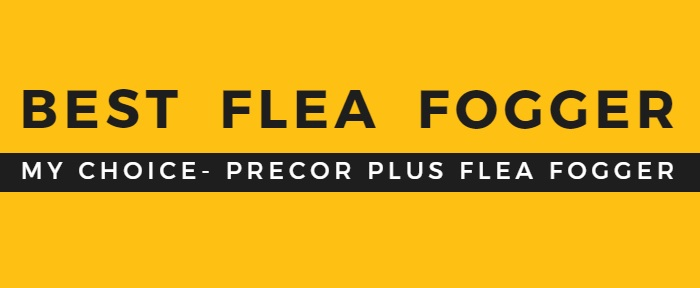 What is the best flea bomb on the market?