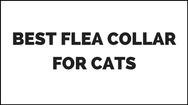 Cat Flea Collar Reviews