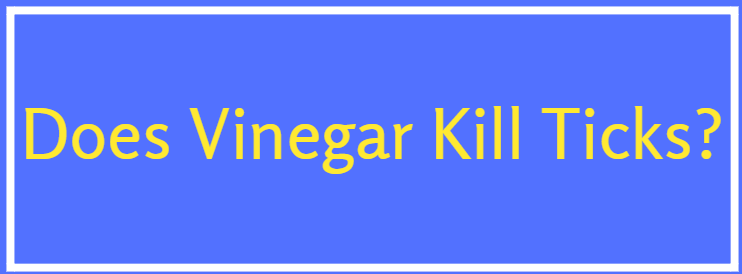 Can vinegar kill termites