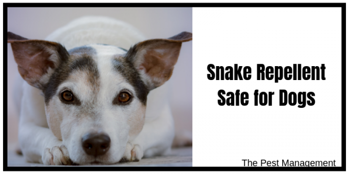 Sane repellent safe for pets