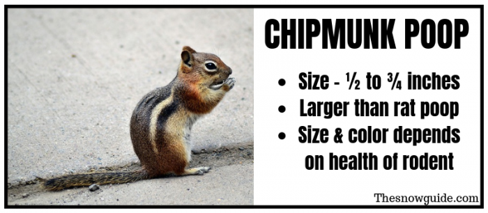 What does chipmunk poop look like