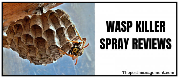 Wasp and Hornet Killer Spray