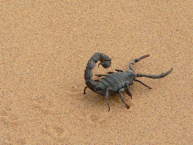 scorpions in the bed