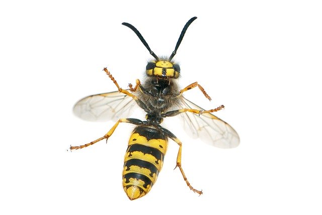 how does soapy water kill wasps
