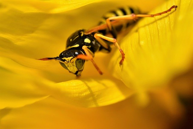 how to kill wasps with soapy water