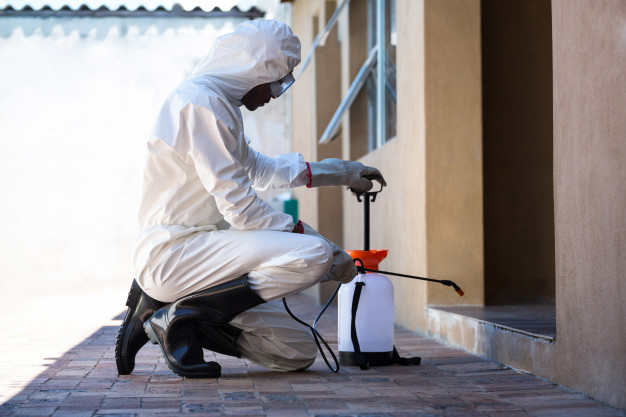 Getting rid of termites in house