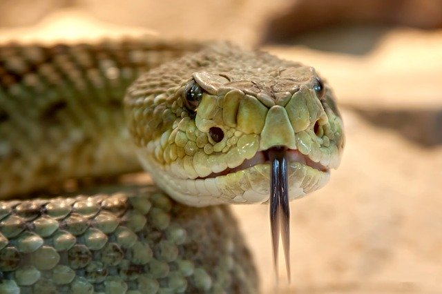 keep snakes away from your yard