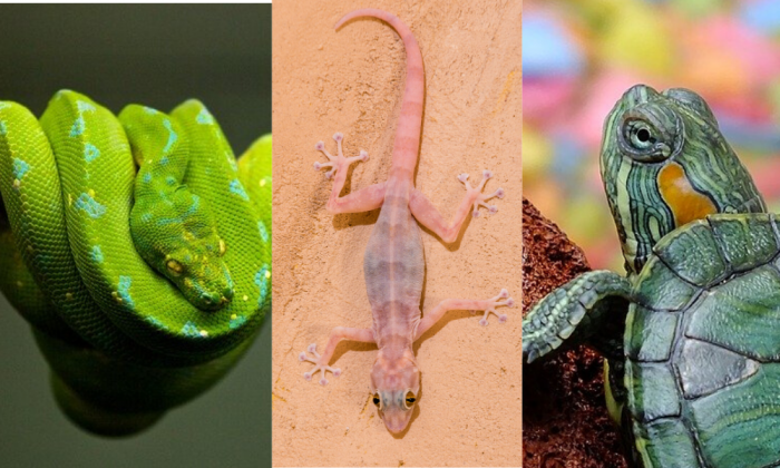 different between snake, lizard, and turtle eggs